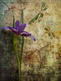 Iris. Greenish background with iris and dragonfly Royalty Free Stock Photo