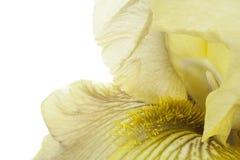 Iris Imágenes de archivo libres de regalías