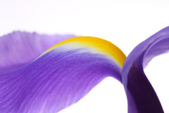Iris. Photographie stock