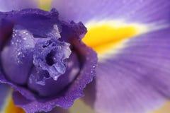 Iris abstrait #2 Images libres de droits