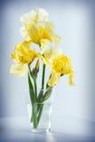 Iris amarillos Foto de archivo libre de regalías