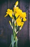 Iris amarillos florecientes Imagen de archivo libre de regalías