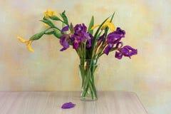 Iris amarillos y púrpuras Fotos de archivo libres de regalías