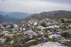 Iris auf einem Gipfel und einer Ansicht der schneebedeckten Berge Stockbild