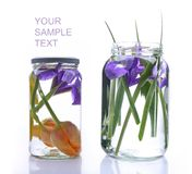 Iris and beautiful tulips in a glass vase Stock Photo