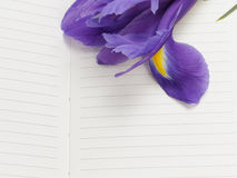 Iris with blank paper note Stock Photo