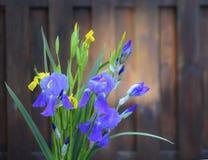 Iris blomma, natur, Royaltyfri Bild