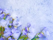 Iris blooming flower arrangement on gray concrete background frame vintage. Iris flower blooming gray concrete background frame vintage arrangement stock images
