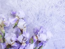 Iris blooming flower  summer arrangement on gray concrete background frame vintage. Iris flower  blooming gray concrete background frame vintage arrangement royalty free stock images