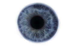 Iris of a blue clean human eye. Macro, close up photo of Iris of a blue clean human eye royalty free stock photo