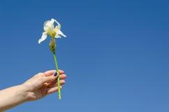 Iris Blume in der Frauenhand auf Hintergrund des blauen Himmels Stockbild