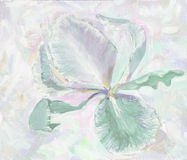 iris Blumenillustration des Sommers, Frühling, Ikone, bloomin Lizenzfreie Stockfotos