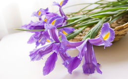 Iris bunch royalty free stock images