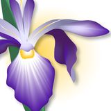 Iris - Close-up Royalty Free Stock Photo
