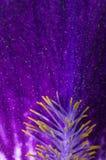 Iris Stock Images
