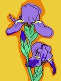 Iris contra un fondo anaranjado Imagen de archivo libre de regalías