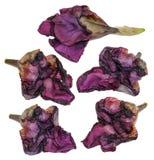 Iris dark blue, purple volume dry perspective, delicate flowers Stock Photos