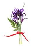 Iris de la primavera imágenes de archivo libres de regalías