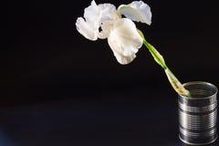 Iris der weißen Blume auf schwarzem Hintergrund Lizenzfreies Stockbild