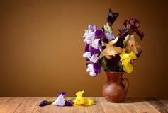 Iris in einem keramischen Vase Lizenzfreie Stockfotos