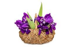 Iris in einem Korb auf einem weißen Hintergrund Stockbild