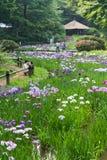 Iris en Meiji Shrine à Tokyo Photographie stock