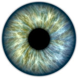 Iris för blå gräsplan Royaltyfria Bilder