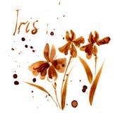 Iris Flower, acquerello Immagine Stock