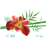 Iris flower and bamboo. Tropical plants vector illustration