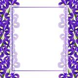 Iris Flower Banner Card Border sur le fond blanc Illustration de vecteur illustration libre de droits