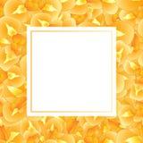Iris Flower Banner Card orange Illustration de vecteur illustration stock