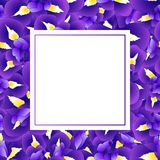 Iris Flower Banner Card pourpre bleu-foncé Illustration de vecteur Illustration Libre de Droits