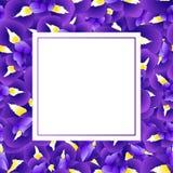 Iris Flower Banner Card pourpre bleu-foncé Illustration de vecteur illustration libre de droits