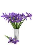 Iris Flower Beauty Royalty Free Stock Image