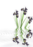 Iris Flower Beauty Royalty Free Stock Photos