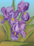 Iris Flower Design Stock Photo