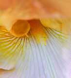 Iris flower details Royalty Free Stock Photos