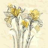 Iris flower  illustration. Royalty Free Stock Photography
