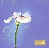 Iris flower japanese watercolor. White iris flower japanese watercolor on blue background Royalty Free Stock Photos
