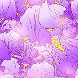 Iris flower pattern Royalty Free Stock Image