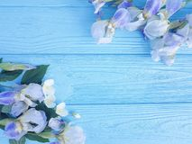Iris flower romance, blossom holiday spring decoration on blue wooden background. Iris flower on blue wooden background romance, blossom decoration spring royalty free stock photography