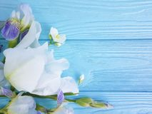 Iris flower romance, blossom spring decoration on blue wooden background. Iris flower on blue wooden background romance, blossom decoration spring stock photography