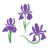 Iris Flower stylized. Two colors vector sign stylized Iris Flower royalty free illustration