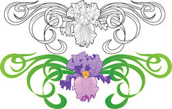 Iris flower vignette tattoo Stock Image