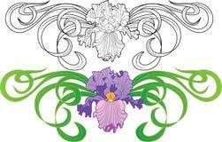 Iris flower vignette tattoo Stock Image