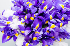 Iris flowers background, spring floral patern. Royalty Free Stock Images
