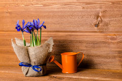 Iris flowers in burlap and water can on wooden background, close Royalty Free Stock Image