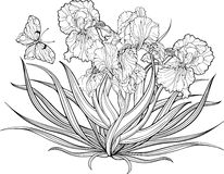Iris flowers and a butterfly. Coloring page. Stock Photography