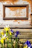Iris Flowers mit alter Wand auf dem Hintergrund Stockbild
