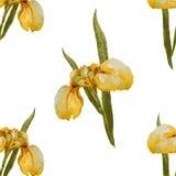 Iris flowers pattern Royalty Free Stock Images